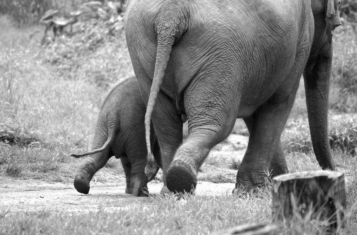 Anus ass butt elephant rectum