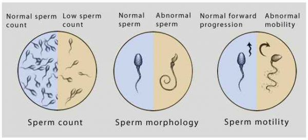 best of Sperm till How fully restored long