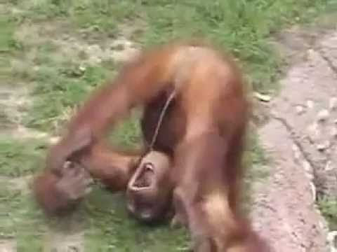 best of Peeing in mouth Monkey its own