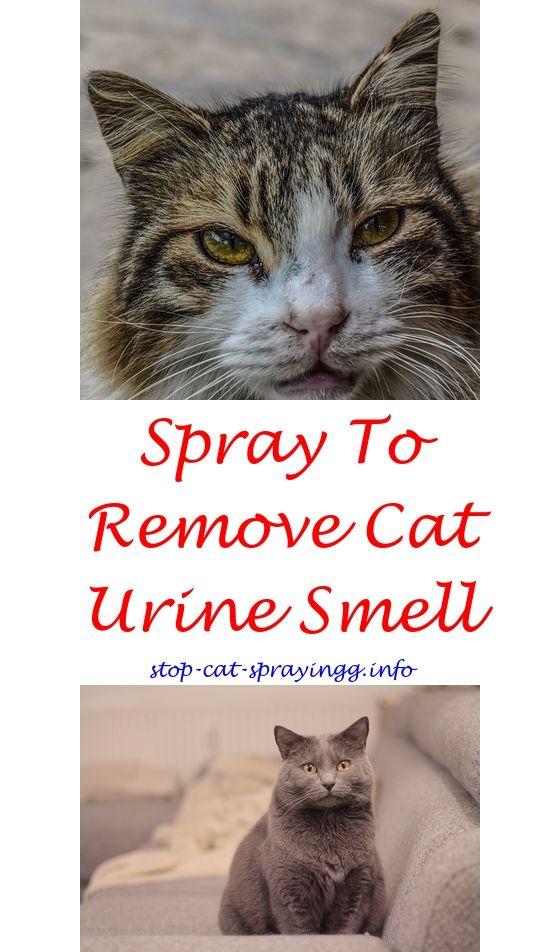 Cinnamon reccomend Stop cat peeing on rug