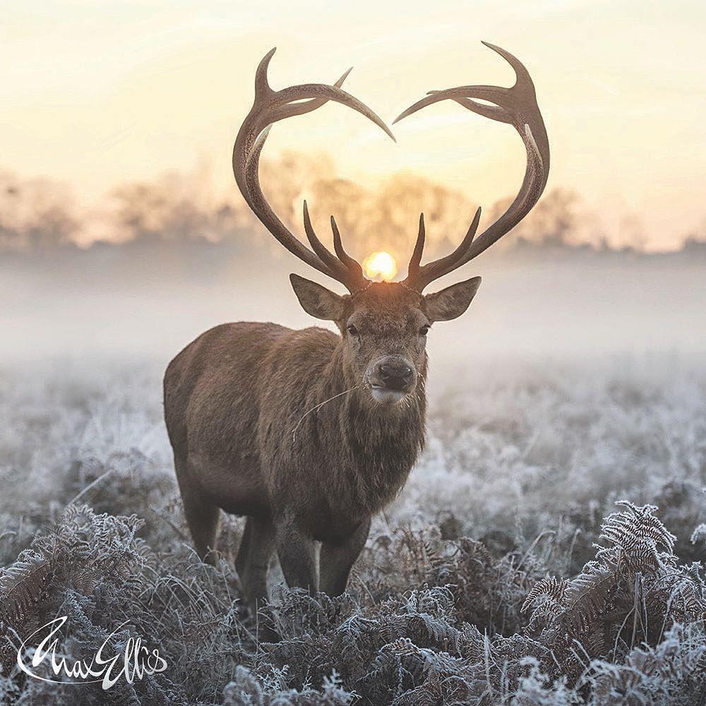 best of Rack and naked Deer