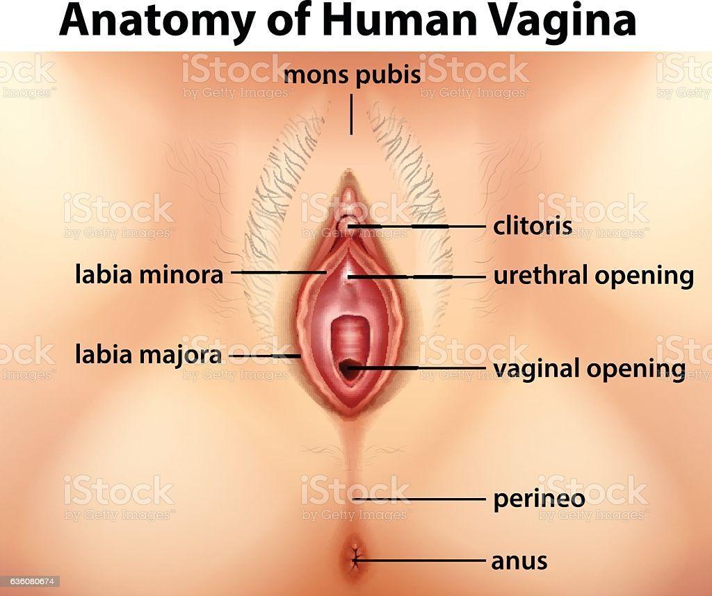Dmoz vulva art