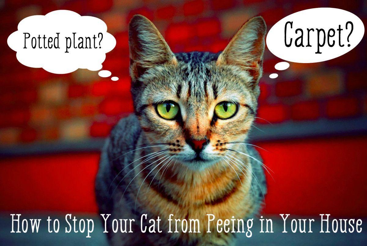 Stop cat peeing on rug